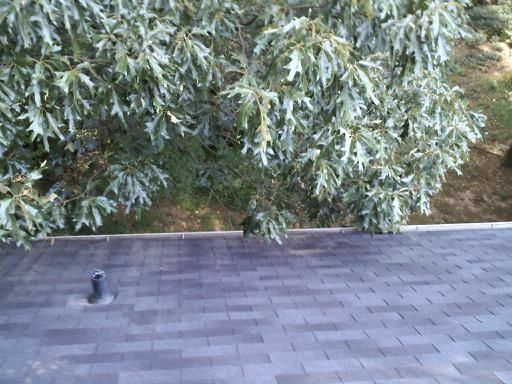 Norcross's Best Gutter Cleaners Before and After Tree Pruning